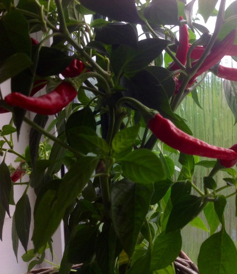 mindful of our Chilli thoughts and feelings