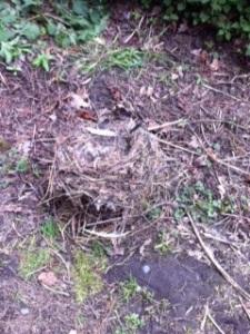 like a discarded nest